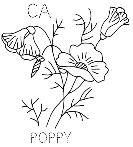 Image Result For California Poppy Coloring
