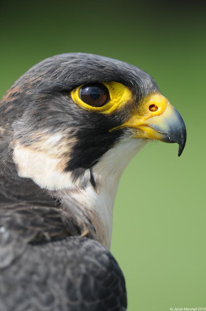Hindu singles in falcon