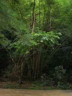 bamboo by river | by nature of I