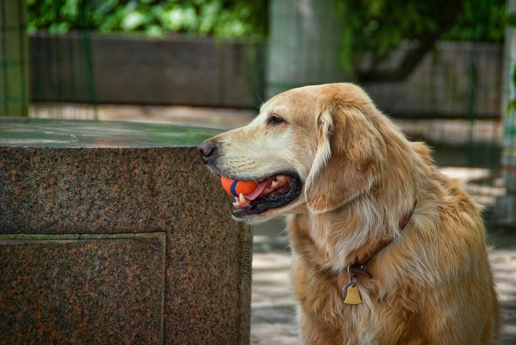 Best Fetching Dog Breeds