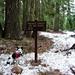 Ringo - Pacific Crest Trail