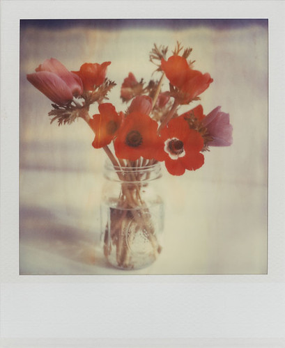 Red and Purple Anemones in a Jar | by futurowoman