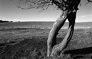Tree In The Pasture, Craig, NE, January, 1987