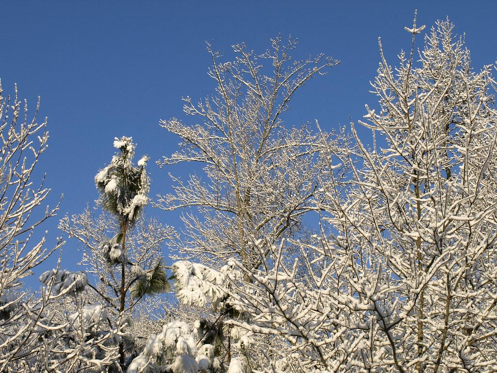 White Iced Snow Scene Cake