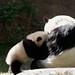 Yun Zi Loves his Momma