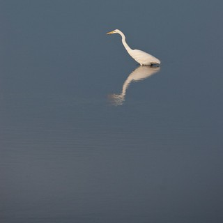 Egret Reflection | by J e n s