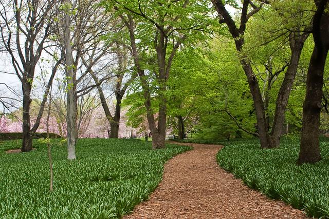 Brooklyn Botanical Gardens Cherry Blossoms Flickr Photo Sharing