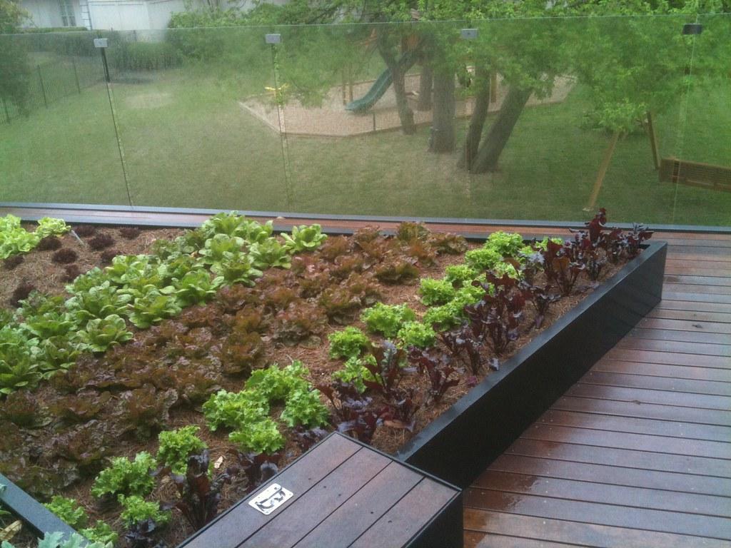 Edible Roof Vegetable Garden