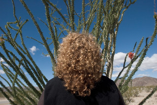 ocotillo and redhead | by chinese johnny