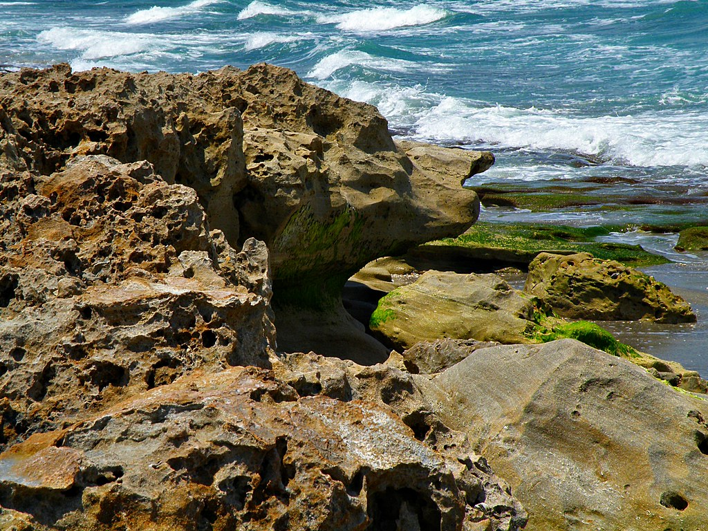 Dog Island Florida Nature Conservancy