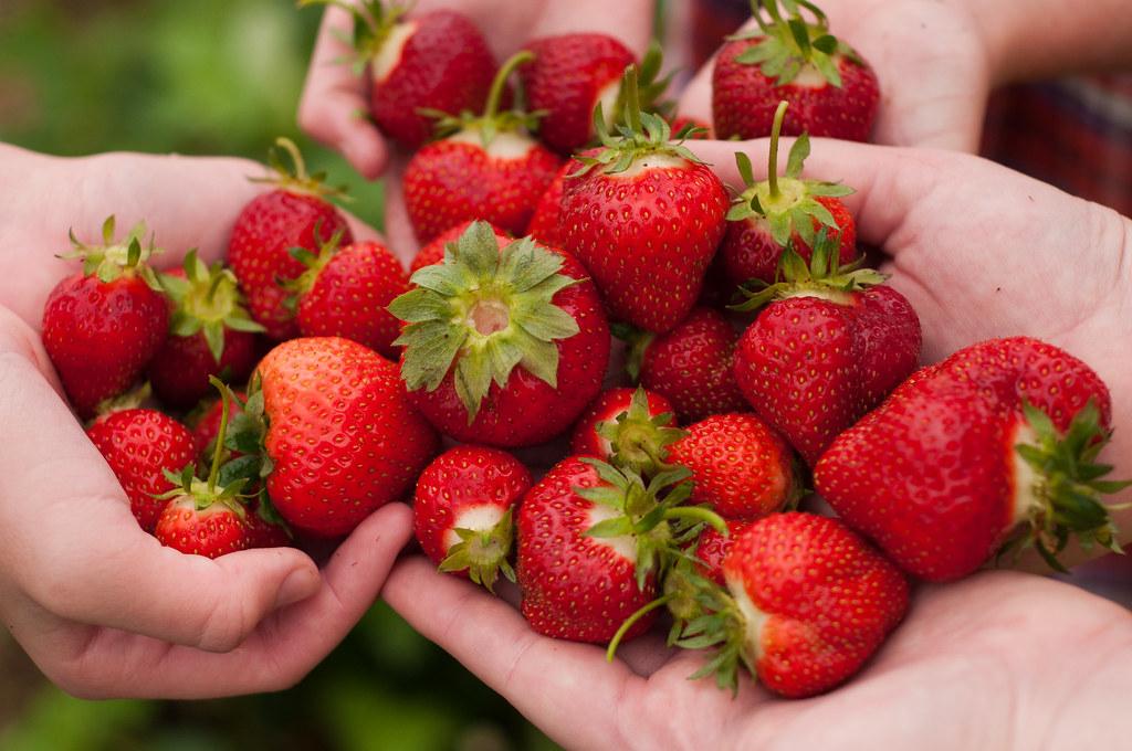 Strawberries Six Hands Holding A Bumper Crop Of Strawberri Flickr