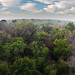 Ebony Evergreen Thornforest
