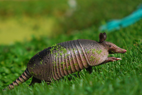 Armadillo | by chris.vandyck