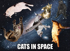 cats in space WF&DT | by Contra Costa Times