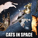 cats in space WF&DT