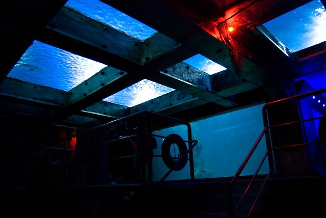 Aquario de Sao Paulo. Flickr - Photo Sharing!