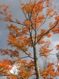 fall trees | by boodely