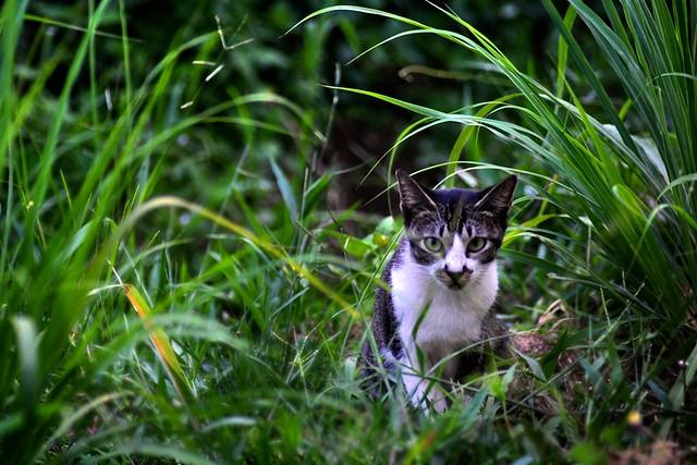 Kucing.my – Fanatik Kucing