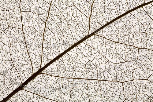 macrophotographie des nervures d 39 une feuille d 39 arbre flickr. Black Bedroom Furniture Sets. Home Design Ideas