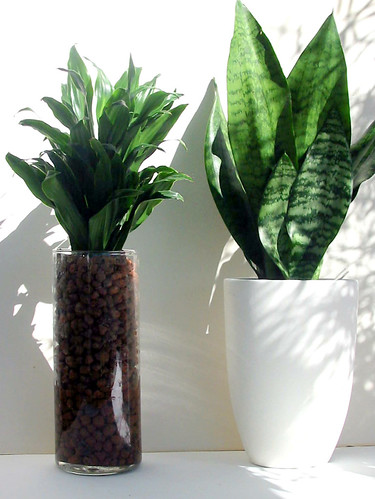 Indoor Plants For Dark Rooms Uk