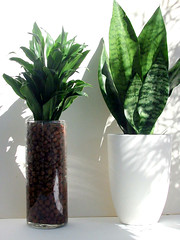 Hydroculture Houseplants | by GreenScaper