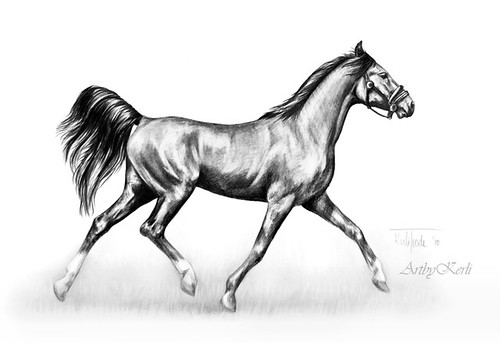 Trotting horse | Pencil drawing on A4, year 2010. Took 2,5 ...