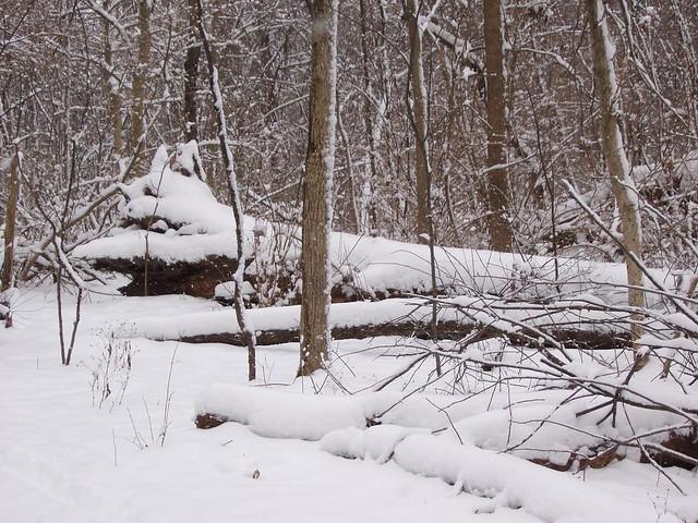 Nature Parks Greenville Sc