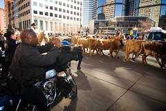 National Western Stock Show Parade | by calanan