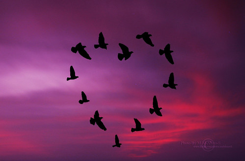 Birds In Love ♥ | by MJ ♛