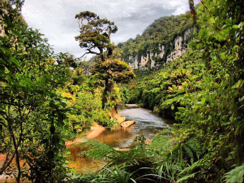 Rio Pororari. Parque Nacional Paparoa