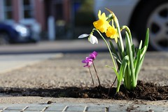 pothole garden 5 | by thepotholegardener