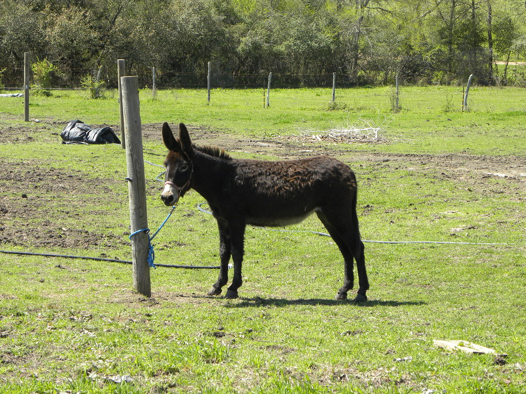 """donkey donkey essay 2a Commonly used slangs in english  the essay you have written will never get an """"a""""  egi haven't met up with my cousins for donkey's years 2afull monty."""