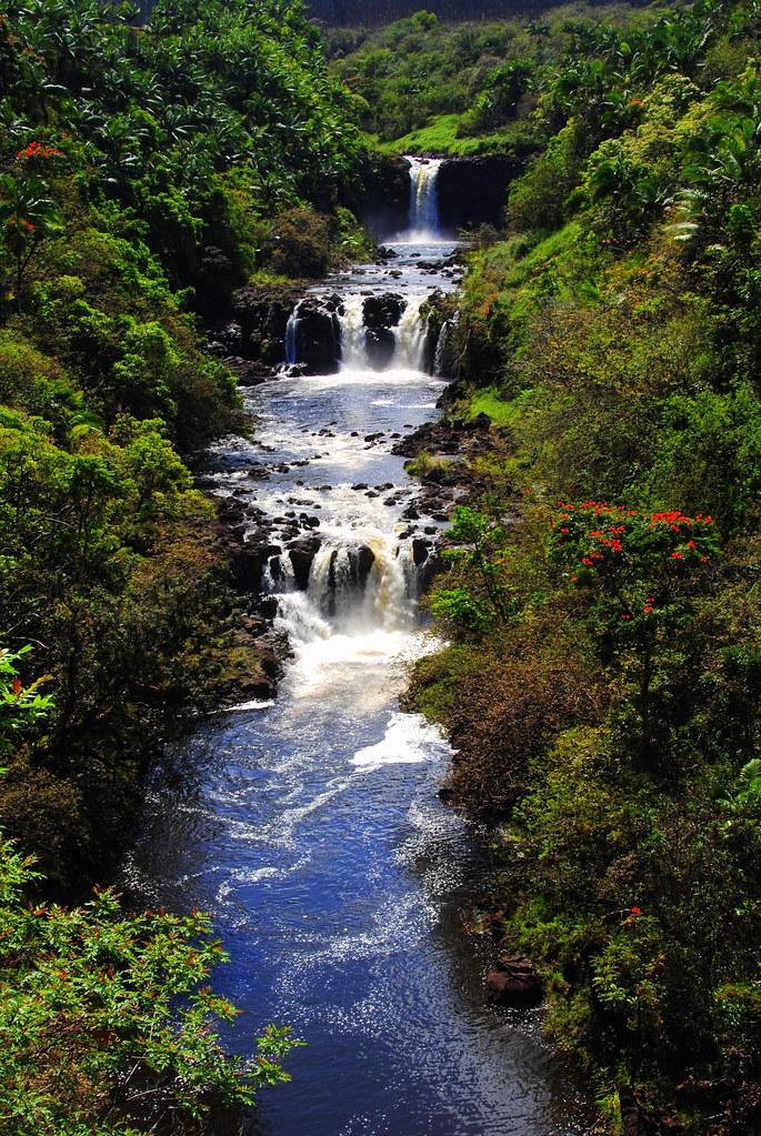 Hilo World Botanical Gardens Garden Ftempo