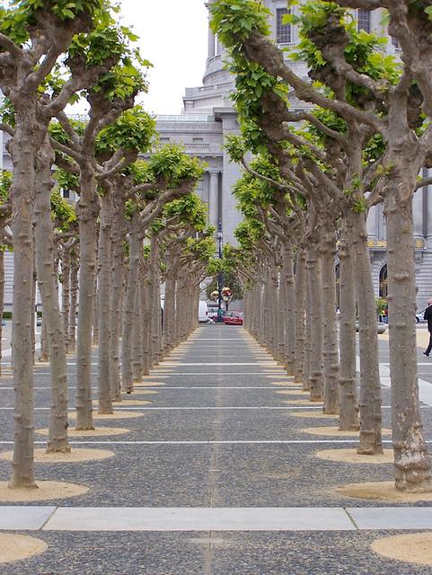 Christmas Wedding Ceremony at SF City Hall  San Francisco City Hall Trees