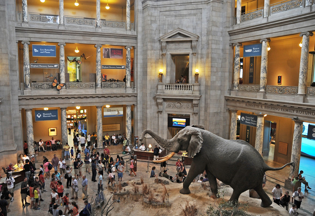 Natural History Museum Dc Jobs