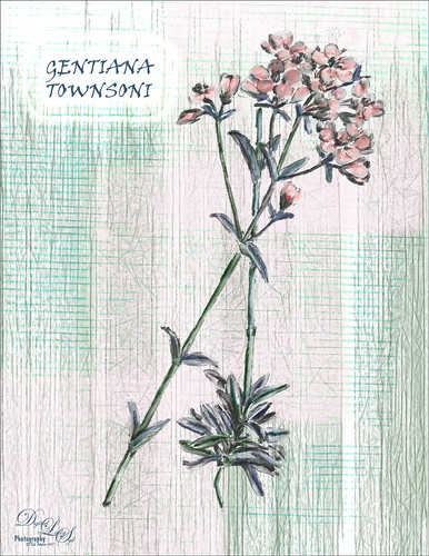 Image of a flower from New Zealand