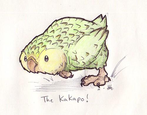 Kakapo drawing