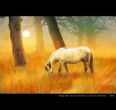 White horse in the fog | by alvar astúlez