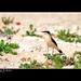 Wild birds in Qatar .......