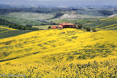 Val d'Orcia 42 | by DeStefano Daniele (OFF-OFF-on)