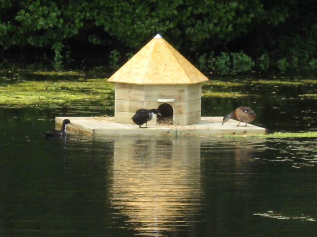 Floating duck house la basse cour b b flickr for House duck