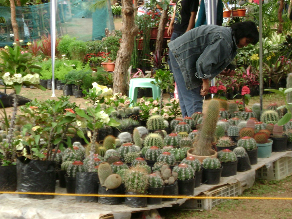 Cactus plants sale at the show panagbenga 09 baguio city for Philippine garden plants
