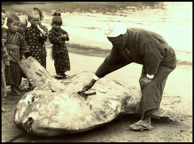 A Dead Sunfish On The Sea Shore Of Old Japan The Fish
