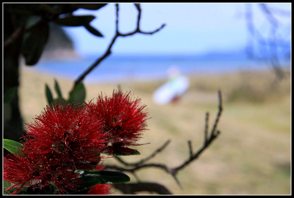 Kiwi xmas tree | True taste of New Zealand summer holidays ...