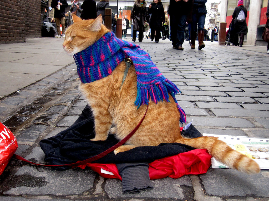 Street Cat Named Bob Brown