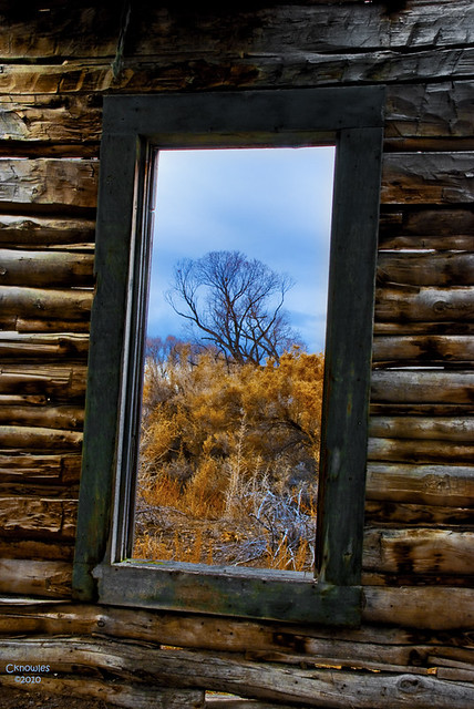 Window and tree | This rustic old cabin made a nice ...