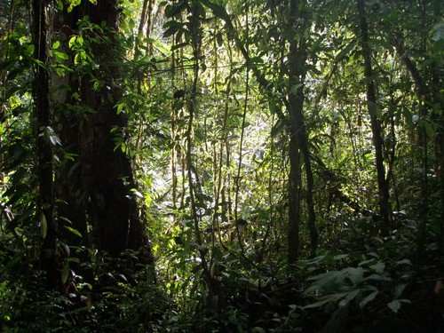 panamatropicaljunglejunglatropicalrainforest1 Flickr