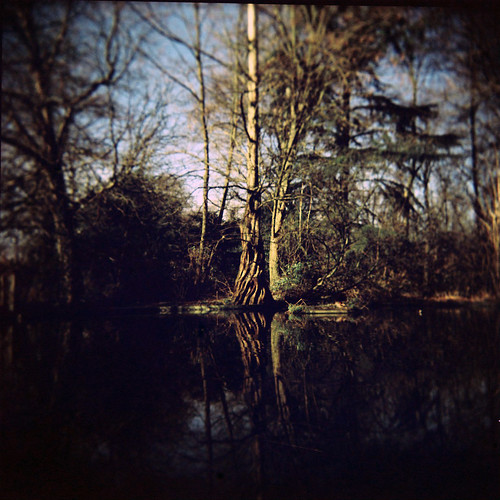 Tree at Holland Park pond | by Anatoleya