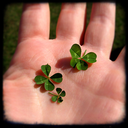 three four leaf clovers I found the other day | by isewcute