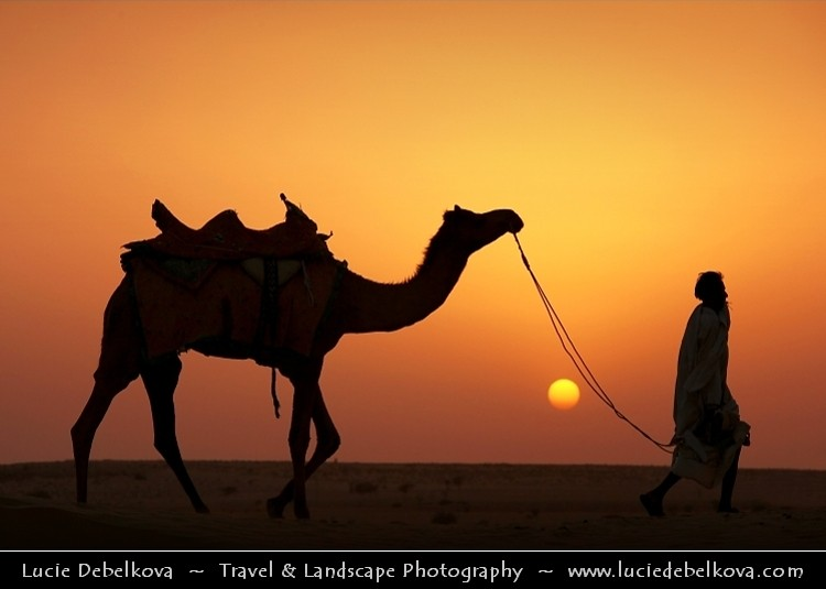 India - Rajasthan - Thar - Great Indian Desert - Camel and ...